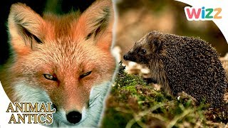 Animal Antics - In the Garden at Night | Full Episodes | Wizz | TV Shows for Kids