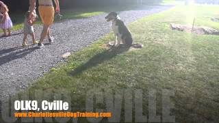 "3 Year Old Rough Collie ""sherlock"" Before/after Video 