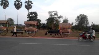 Oxcart VIDEO