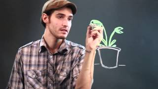 How to Draw a Fly Eating Plant