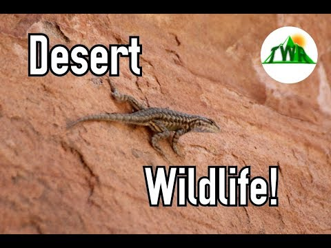 Discovering Wildlife In North America's Hottest Desert