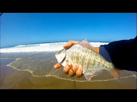 surf fishing at lincoln city redtails oregon fishing