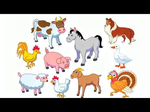 Домашние животные и птицы! Обучающее видео для детей ! Стишки о животных для самых маленьких !