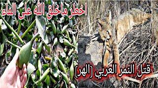 صيد الزرزور والدراج  مع ابو عباس. وعثرنا على زهرة النيل
