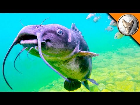Thumbnail: The BEAST of the Diving Quarry?