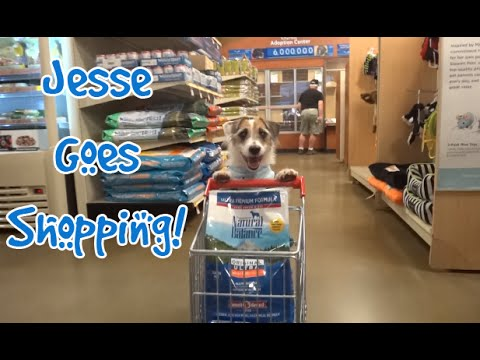 Jesse the Dog Goes Shopping