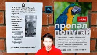 Как найти попугая? Дизайн спешит на помощь!