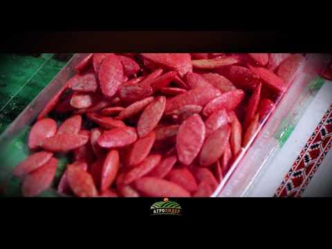 Семена огурец Цезарь F1 - Агролидер