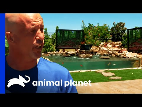 Brett's Backyard Tank Is Fit For The Big Screen! | Tanked