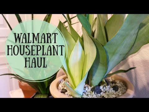 Walmart Haul of Houseplants