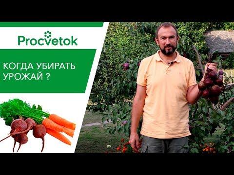 Вопрос: Какой сидерат лучше для моркови?