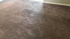 Lightning Carpet Care 2/15/2019 Sanford, Fl Carpet Cleaning