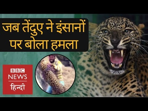 Leopard enters residential area in Jalandhar, Punjab (BBC Hindi)