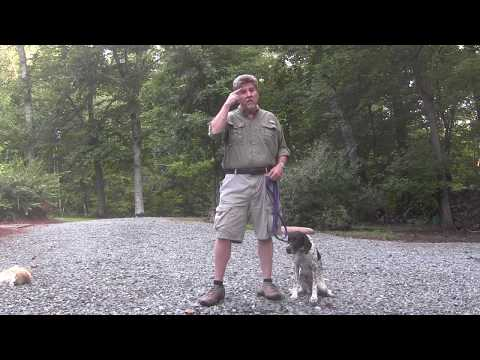 German Shorthaired Pointer Puppy Training Raleigh NC | Layla