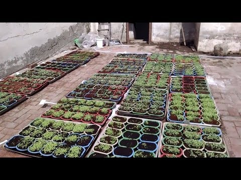 How To Germinate Seeds Secret Method Of Sky Nursery 8 Days Ka Result