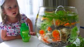 Аквариумные золотые рыбки, телескопы. Ярослава кормит золотых рыбок.Влог.