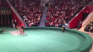 Смешные козочки выступление в цирке разные животные смотреть мультфильм про животных.  Funny goat