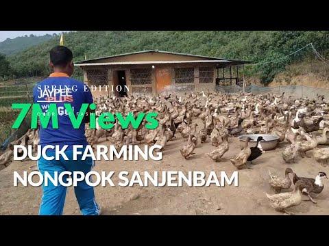 Duck Farming At Nongpok Sanjembam | Manipur - India