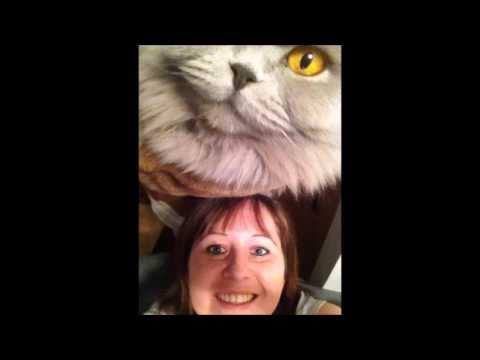 HCM Katze - In Erinnerung an Lilly