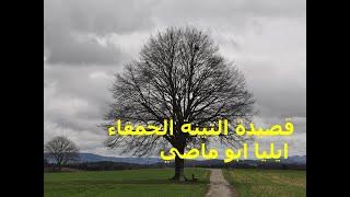 قصيدة التينة الحمقاء - إيليا أبو ماضي