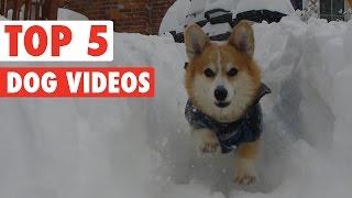 Top 5 Dog Videos    Feb 12 2016