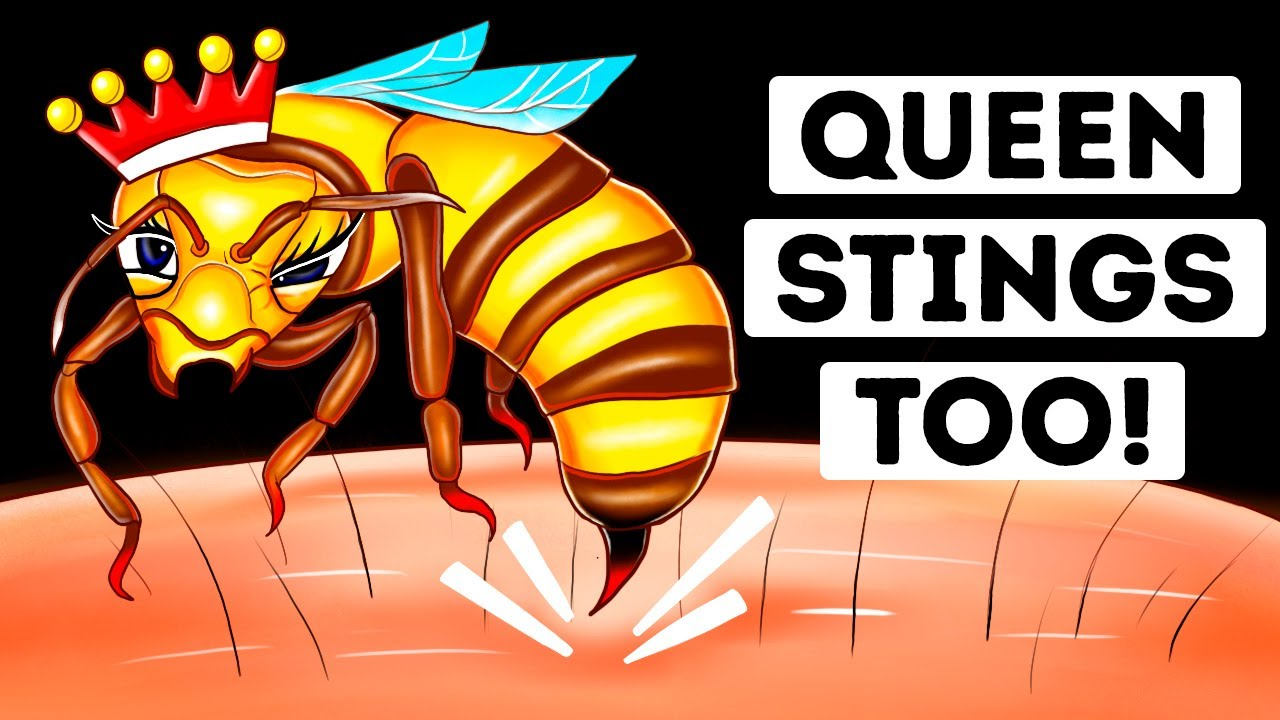 Download Are Queen Bee Stings More Dangerous? (We Found Out)