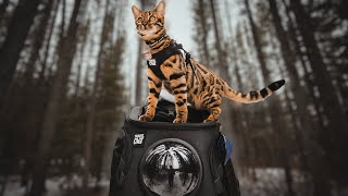 BEST Amazon Cat Products FOR ADVENTURE CATS - **GIVEAWAY**