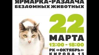9 Ярмарка-раздача бездомных животных в Томске