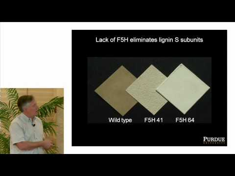 2014 GCEP Technical Talks: Renewables | Lignin in Biofuel Pr