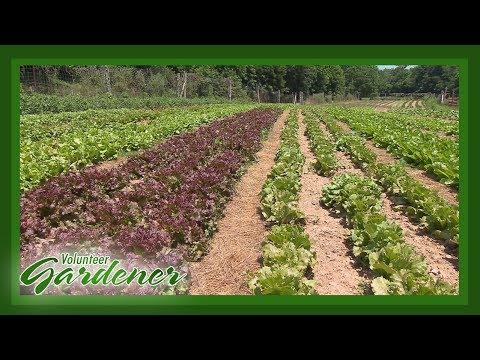 Biodynamic vs. Organic Farming Practices | Volunteer Gardener