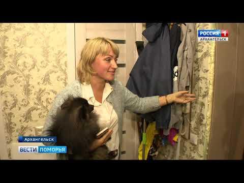 Жители многоэтажки в центре Архангельска в панике от наплыва крыс