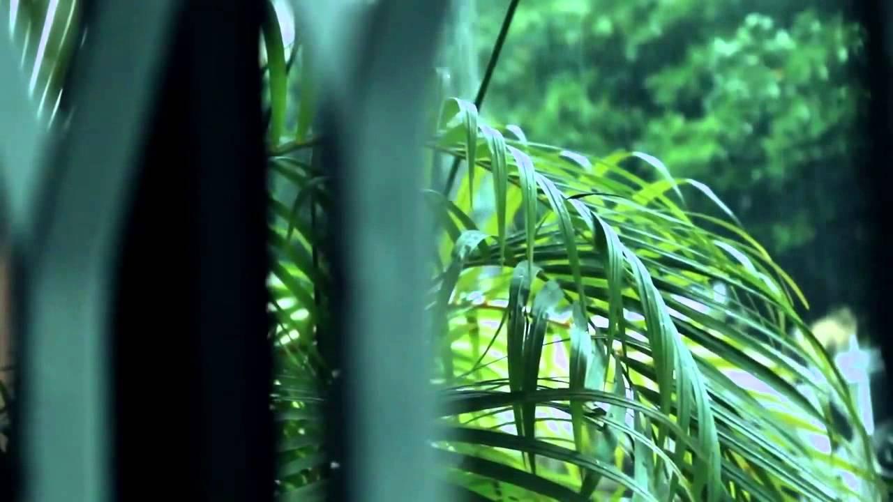 Download DJIMBE -  You Are My Jah