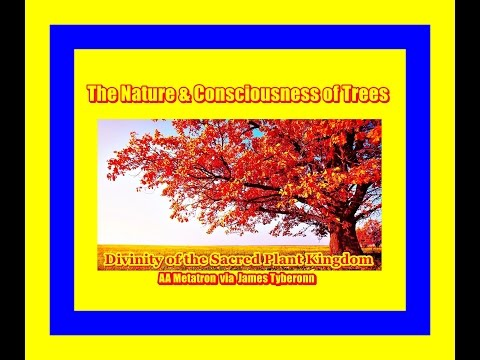 The Consciousness & Sacred Nature of Trees -  Metatron via Tyberonn 2015