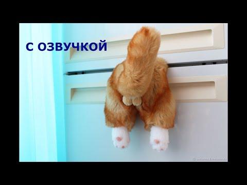 Приколы с котами с ОЗВУЧКОЙ ДО СЛЁЗ – Смешные КОТЫ 2020 – ПОПРОБУЙ НЕ СМЕЯТЬСЯ!
