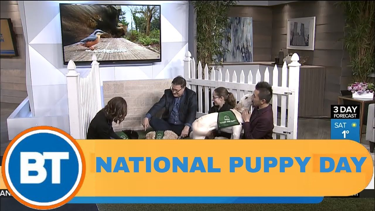 maxresdefault - Celebrating National Puppy Day with guide dogs