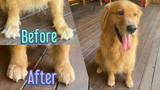 How to trim hair between dog's toes/paws.
