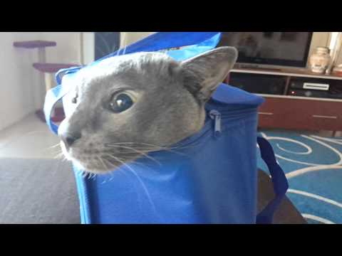 Who let the cat out of the bag?
