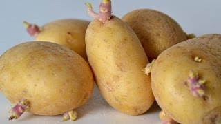 Growing potatoes at home is easy