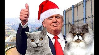 build-the-wall-christmas-special-featuring-confederate-cat