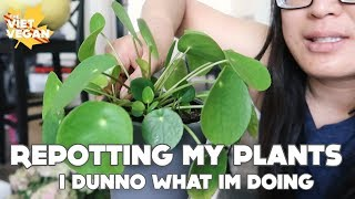 Plant with Me! // Repotting My Plants