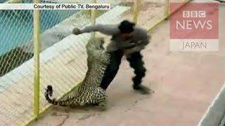 ヒョウが侵入でパニック インドの学校