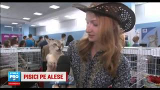 ProTV - Expozitia Felina Internationala SofistiCAT