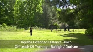 "1yo German Shepherd ""keesha"" Before And After Video - Raleigh Durham Dogtrainer"