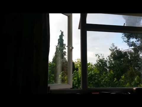 Birdsong at dawn. Nightingale or thrush?