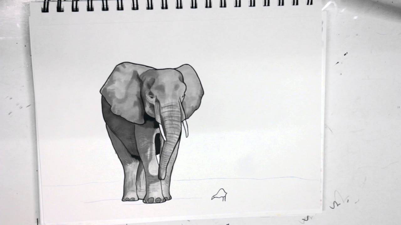 Elephant Drawing - Coloring with Prismacolor Markers - YouTube