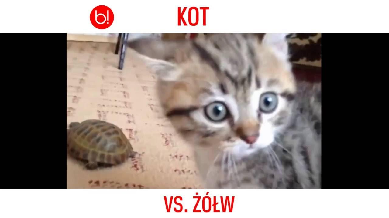 Epicki Pojedynek Kot Vs żółw Youtube