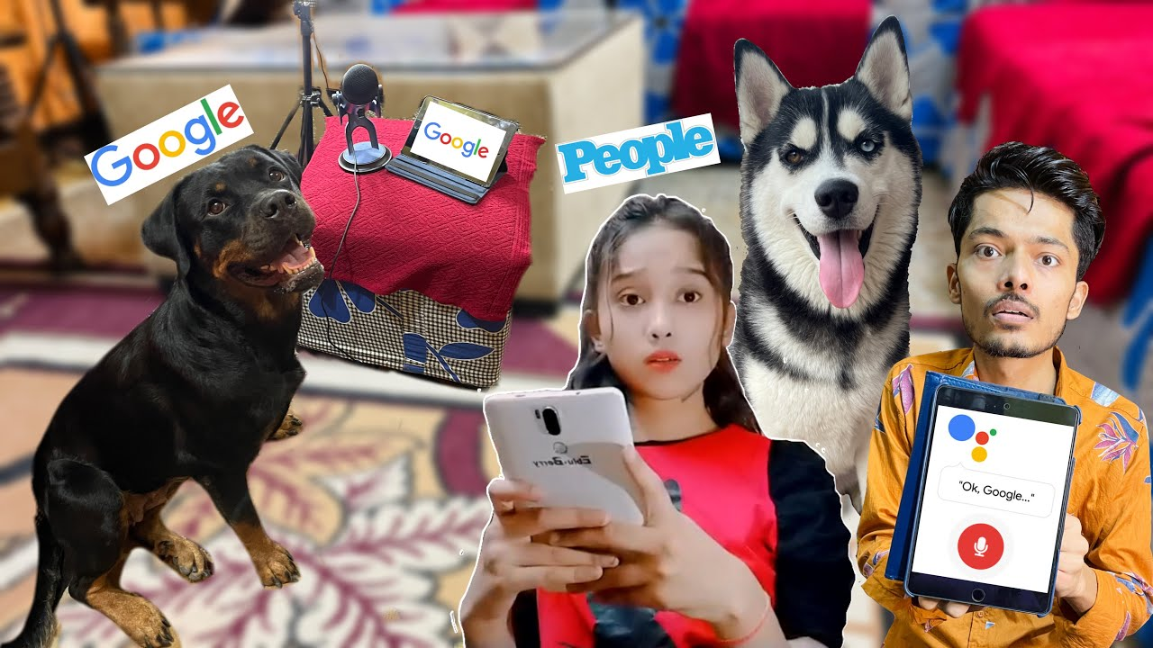 """IF GOOGLE WAS A DOG """"ROXY""""  Dog can talk part 125 
