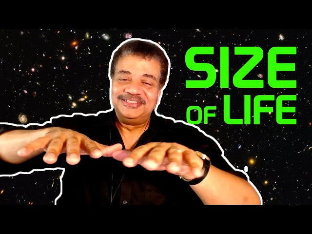 Neil deGrasse Tyson Explains the Physics of Size and Life