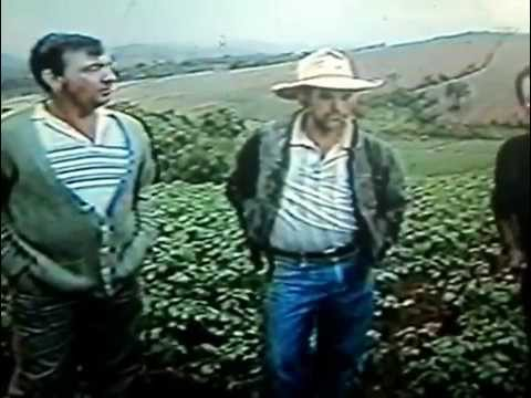 Reportagem do Programa Manchete Rural em Senador Amaral 1989