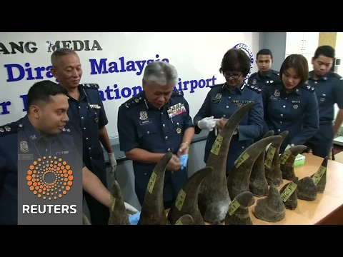 Malaysian seizes about $3.1 million worth of rhino horns